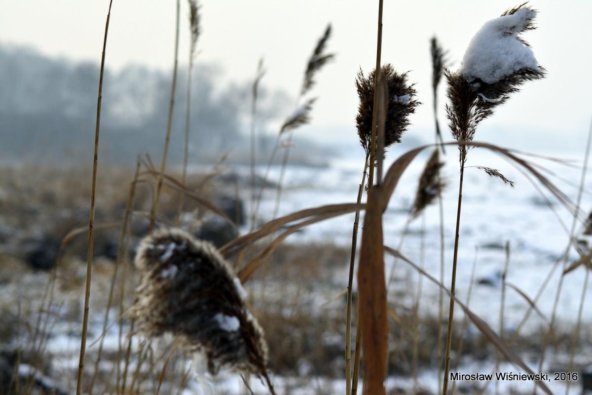 Zapora Goczałkowicka zimą